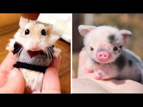Cute baby animals Videos Compilation cutest moment of the animals - Soo Cute! #16