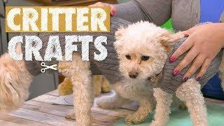How To Make DIY Pet Sweaters | Critter Crafts