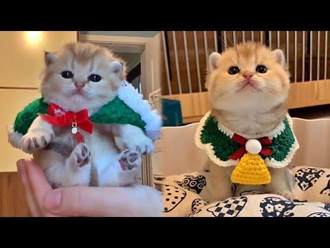 Cute Little Christmas Kitty Video
