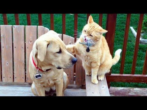 Ninja Cats vs Dogs - And The Winner Is...