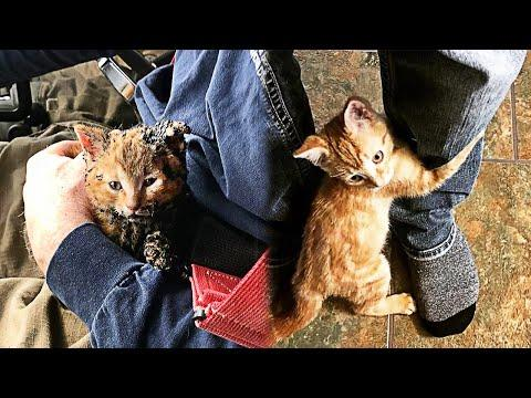Stray Kitten Rescued From Fire Hugs The Man And Doesn't Let Go #Video