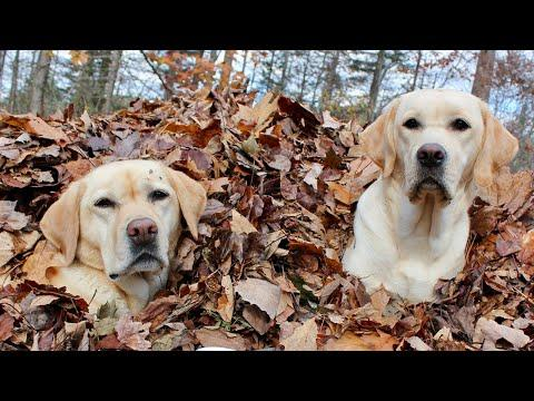 Stella and Mabel's Best Leaf Jumps Video of 2020 (So Far)