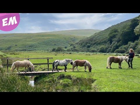 Mini Pony Liberty Trail and Wild Swim - Emma Massingale #Video