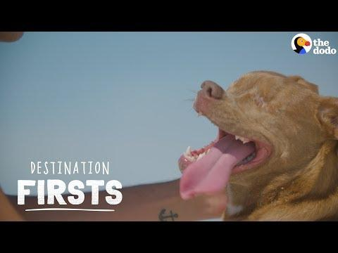 Blind Rescue Dog Feels Sand for the First Time | The Dodo Destination: Firsts
