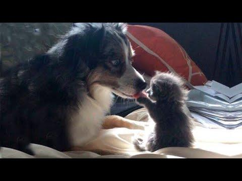 Relaxing your Mind Video by Funny and Cute Moments Dogs Playing with Baby Animals