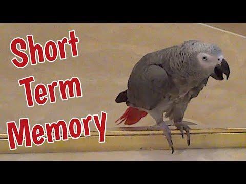 Einstein has a short term memory #Video