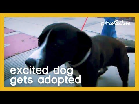 Excited Dog Gets Adopted Video