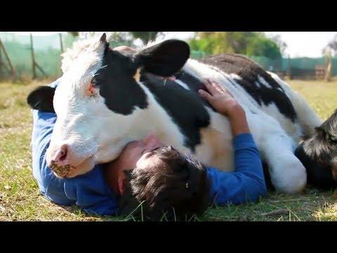 Animals Show Love for Humans - Animals Hugging People - Animals Hugs Video