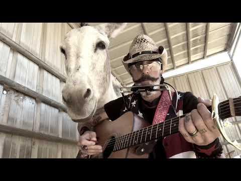 Donkey named Hazel Loves Harmonica and acoustic guitar. Donkey is a classic rock fan #Video