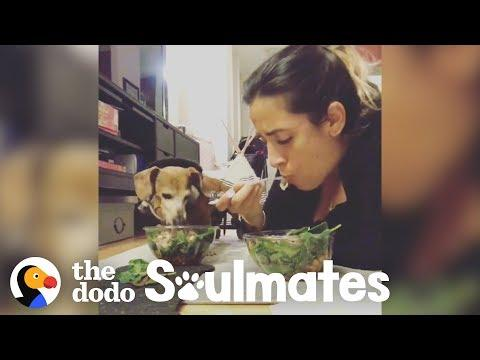 Paralyzed Dachshund Eats Dinner with Her Mom Every Single Night | The Dodo Soulmates