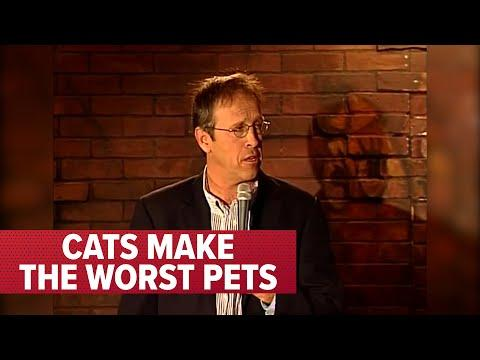 Cats Make The WORST Pets Video | Comedian Jeff Allen