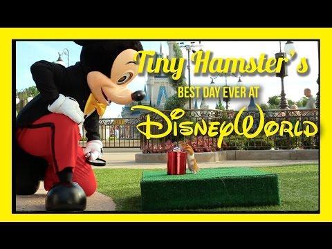 Tiny Hamster's Best Day Ever At Walt Disney World