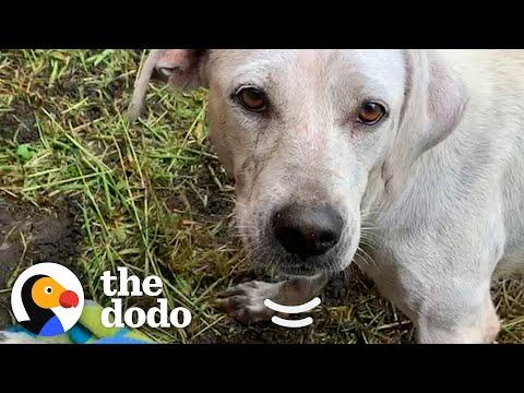 Mama Dog And Her Puppies Found Under A Bus Video — See Them All A Year Later!