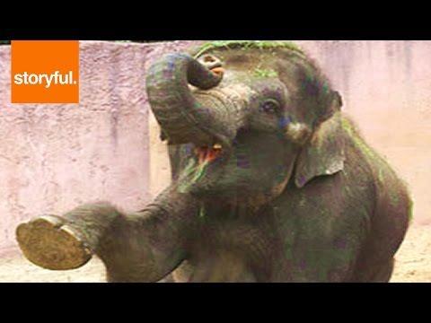 Elephants Dancing to Violin Video! Adorable!
