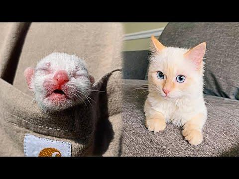 Found Abandoned Kitten Grows Up To Be A Strong And Playful Cat #Video