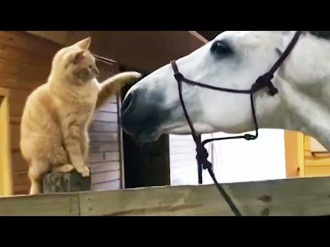 Naughty pets Funniest Videos #2