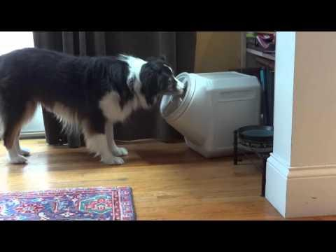 Dog Opens Dog Proof Container