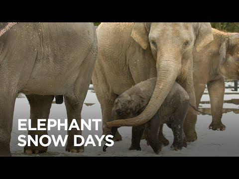 Caring for Oregon Zoo Elephants in Winter