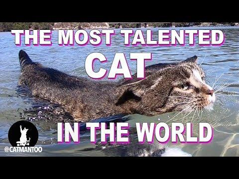 The Most Talented Cat lives in Australia (Compilation)