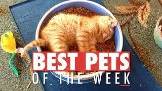 Best Pets of the Week | December 2017 Week 3