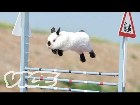 Cute Bunny Jumping Competition Video!