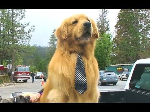 Dog Runs For Mayor And Wins - Your Daily Dose Of Internet