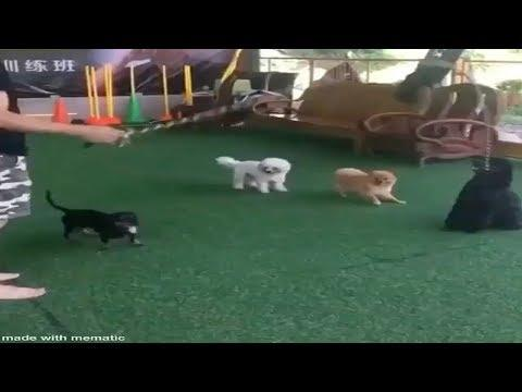 These Dogs Jump Rope Better Than You!