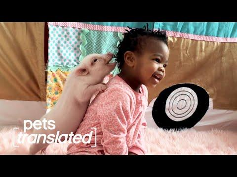 Babies & Animals Video | Pets Translated