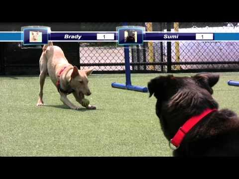 Battle For The Ball - Brady Vs. Sumi - Shelter Dogs Playing