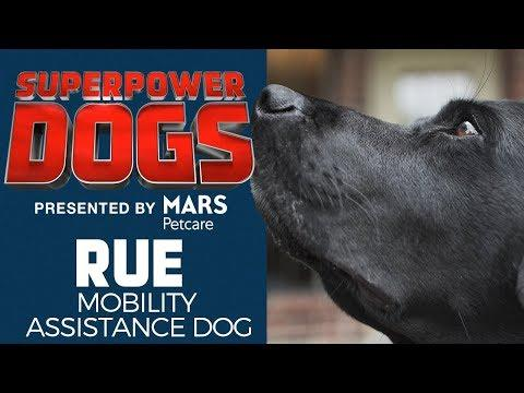 Mobility Assistance Dog: Rue | Superpower Dogs
