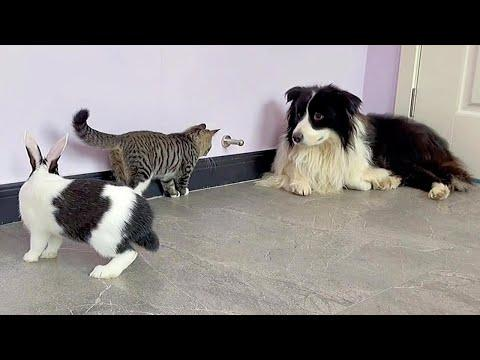 Dog, Bunny and Kitten The Cutest Playful Trio #Video