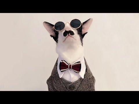 The Cool Mustache Cat Video