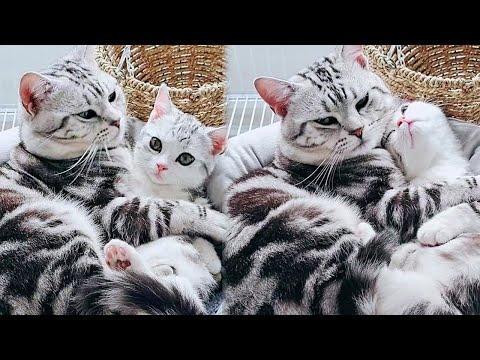 Super Cute Kitten and Mama Cat #Video