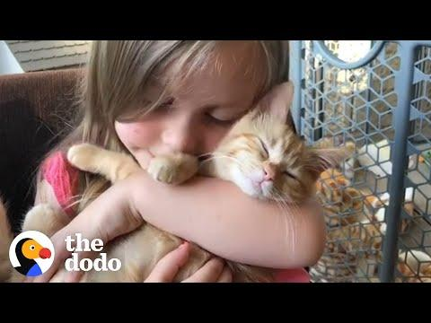 Little Girls Have The Most Special Relationship With Cats | The Dodo