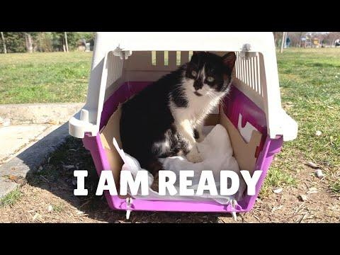 Rescued cat walks in the carrier herself. Video