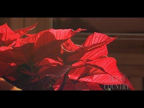 Poinsettia Farm (Texas Country Reporter)