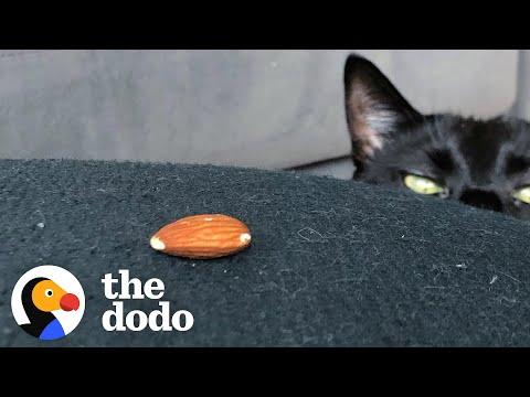 Very Scary Cat Is Obsessed With A Tiny Almond #Video