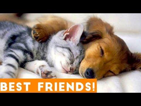 Cutest Pet Friend Compilation September 2018| Funny Pet Videos