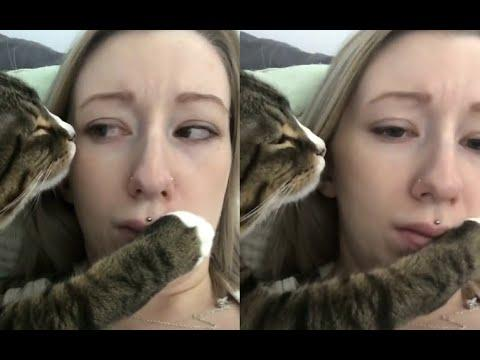 Overly Romantic Cat Annoys Owner. Your Daily Dose Of Internet.