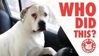 Who Did That?! | Guilty Dogs Video Compilation 2017