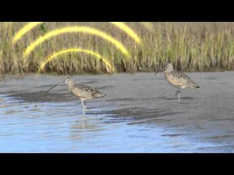 Unlocking The Secrets Of Bird Migration