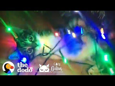 Cats Destroying Christmas Trees And Loving Every Minute