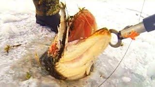 10 CRAZIEST FISHING CATCHES