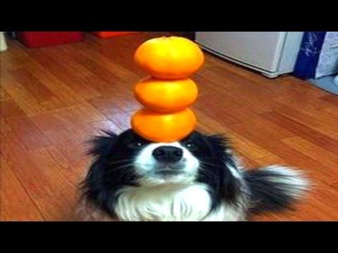 10 Awesomely Talented Dogs