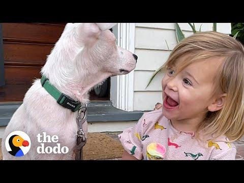 2-Year-Old Girl Convinces Her Mom To Adopt A Deaf Puppy Video