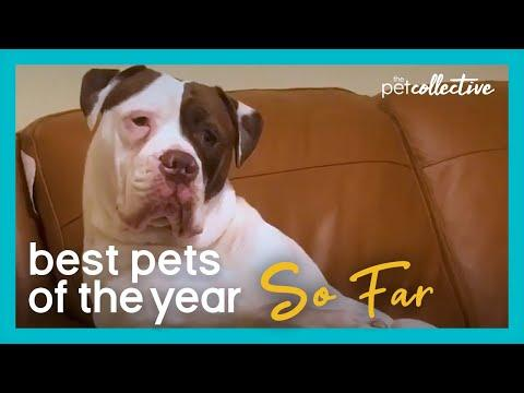 Best Pets Of The Year Video...So Far: PART I (2020)