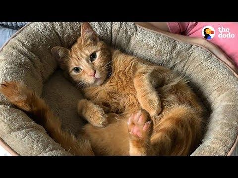 Nothing Can Keep This Wobbly Cat From His Food | The Dodo