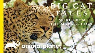 The Leopard   Big Cat Tales: More from the Mara Region