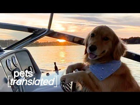 The World's Fanciest Pets | Pets Translated #Video