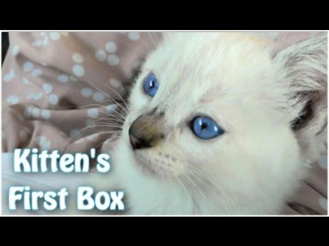 Kitty's First Cardboard Box